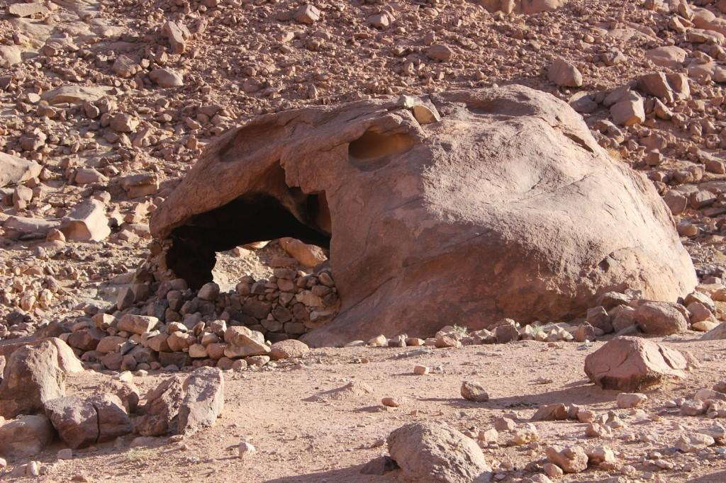 Череп динозавра