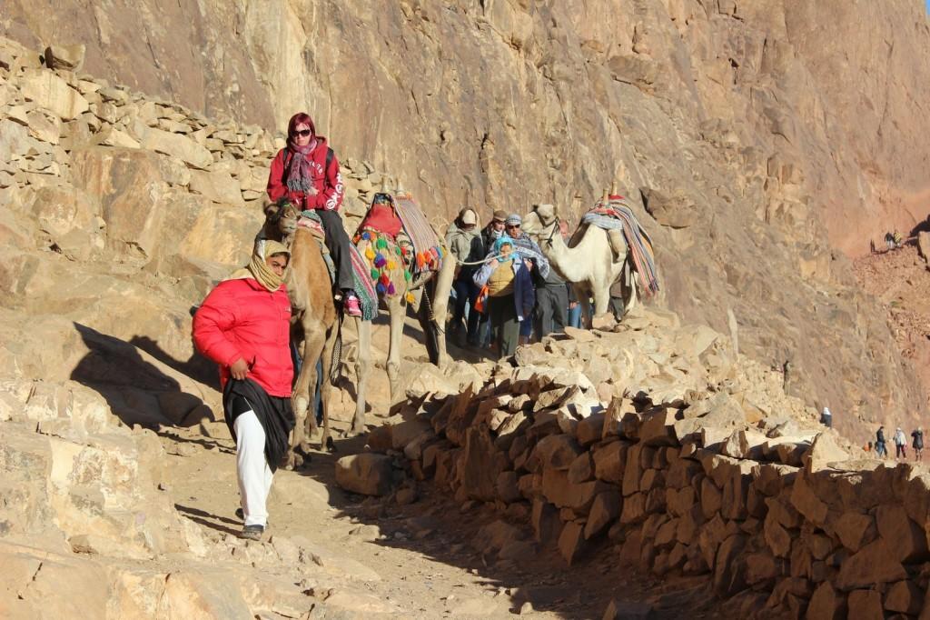 На верблюдах с горы Моисея