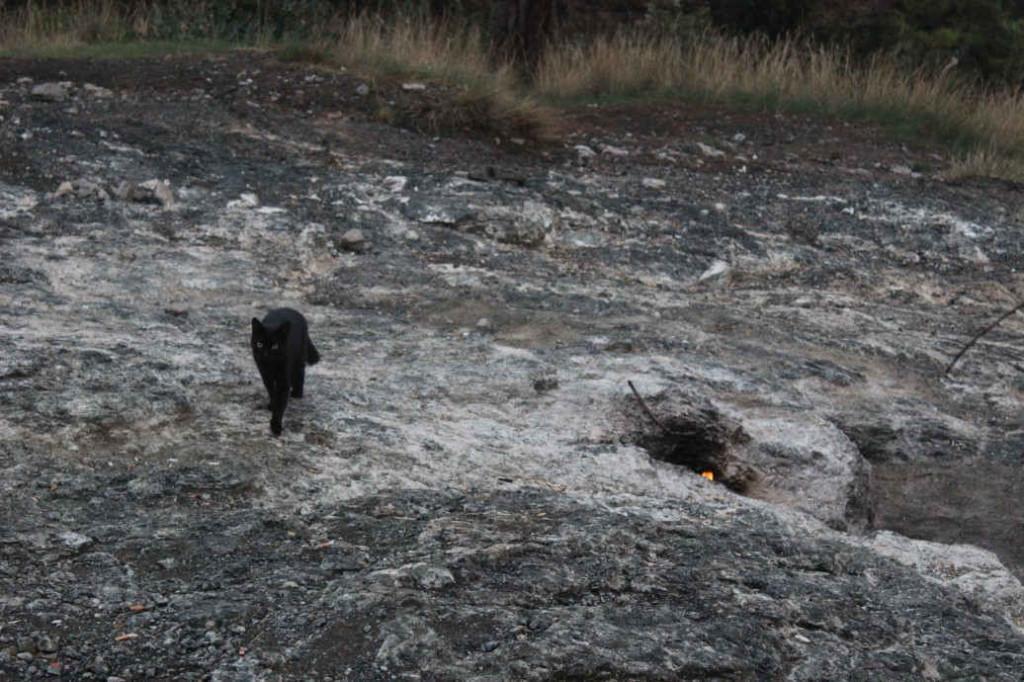 Кошка с горы Химера